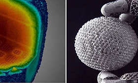 scientific visualizations, side by side